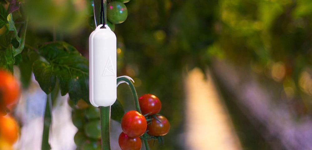 greenhouse sensors